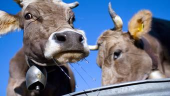 Für Nancy Holten sind Kuhglocken reine Tierquälerei. Auf Facebook hat sie eine Gruppe gegründet und will so gegen die alte Tradition ankämpfen.Keystone