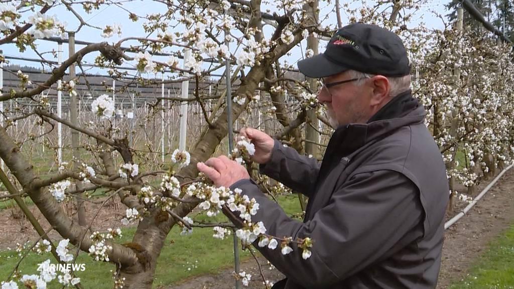 Obstbauern sind wegen Winter-Comeback besorgt