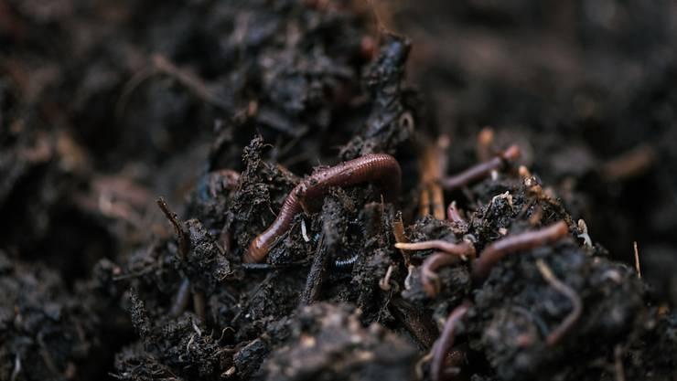 Humus ist ein wichtiger Faktor bei der Bodenqualität. Und der hängt wiederum von Bodenorganismen ab. (Archivbild)