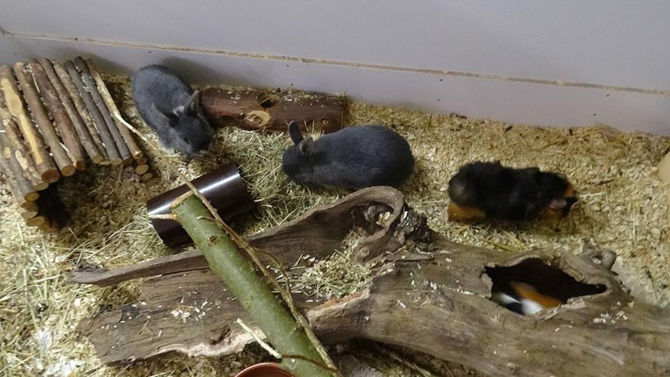 Diverse Kaninchen und Meerschweinchen
