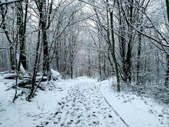 Waldweg in Hausen AG