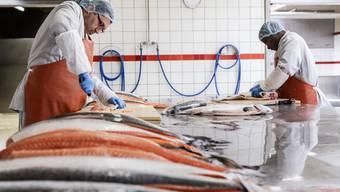 Beim Lachs filetieren in der Dyhrberg AG.