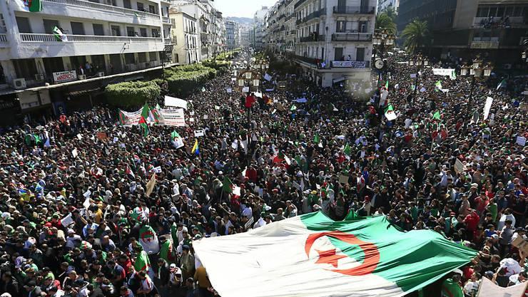 In Algerien gehen immer mehr Menschen für einen politischen Wandel auf die Strassen.