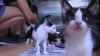 Rund 90 Katzen warten in Untersiggenthal auf ein neues Zuhause. Damit ist das Tierheim so überfüllt, dass es kaum weitere Tiere aufnehmen kann.