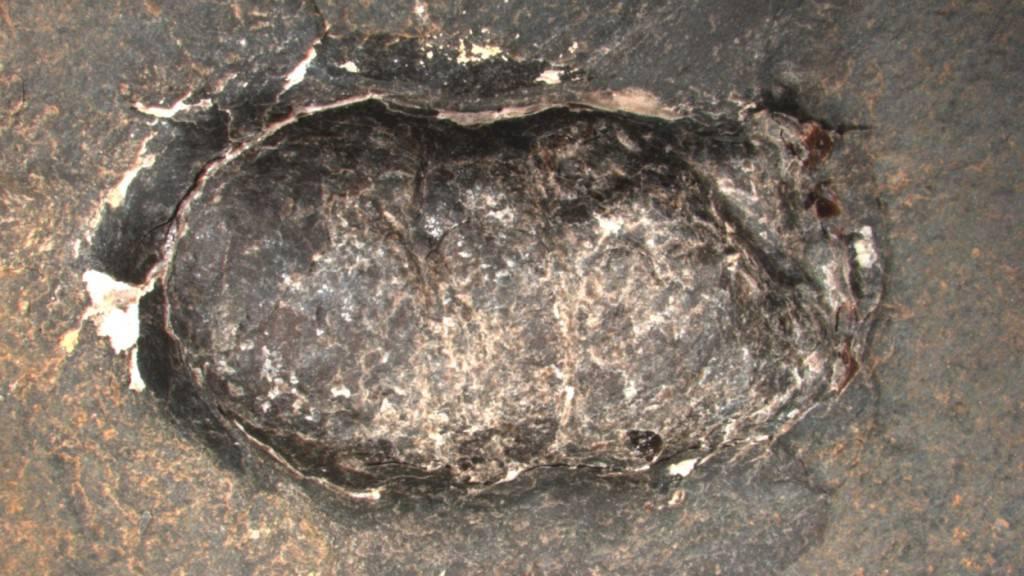 Fossiler Kot gibt Einblick in Leben von Tieren vor Millionen Jahren