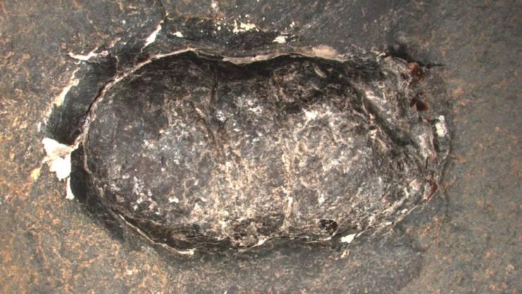 Fossiler Fischkot: In den versteinerten Ausscheidungen fanden die Forschenden zahlreiche Schuppen anderer Fische.