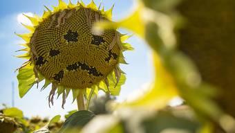"""""""Heisszeit"""" ist das deutsche Wort des Jahres - es umschreibt einerseits den extremen Sommer und bezieht sich andererseits auf den Klimawandel. (Symbolbild)"""