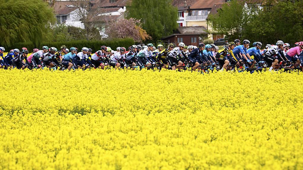 Das Feld unterwegs während der 2. Etappe der Tour de Romandie