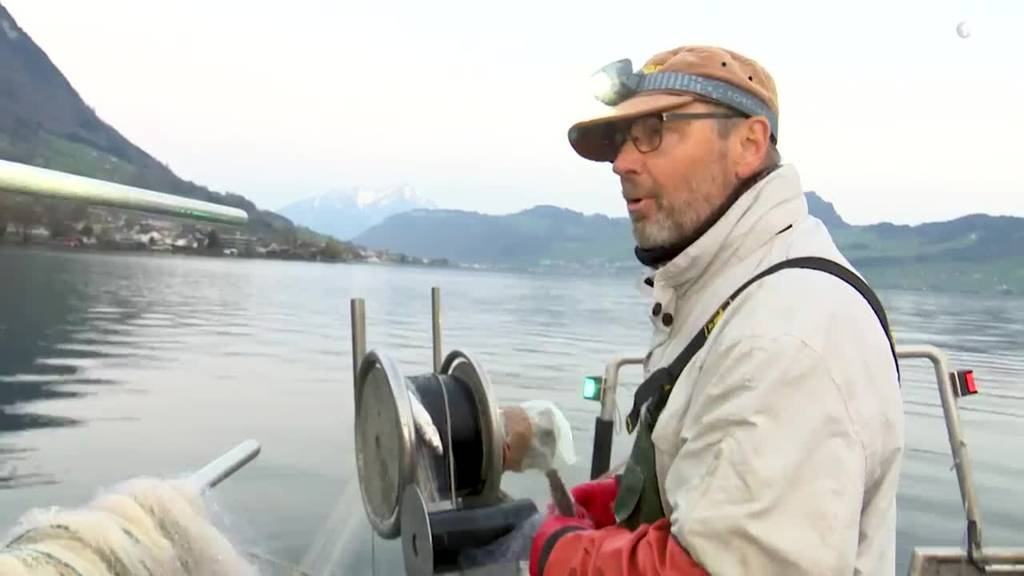 «Tag im Läbe vo» Berufsfischer Kari Frank aus Ennetbürgen