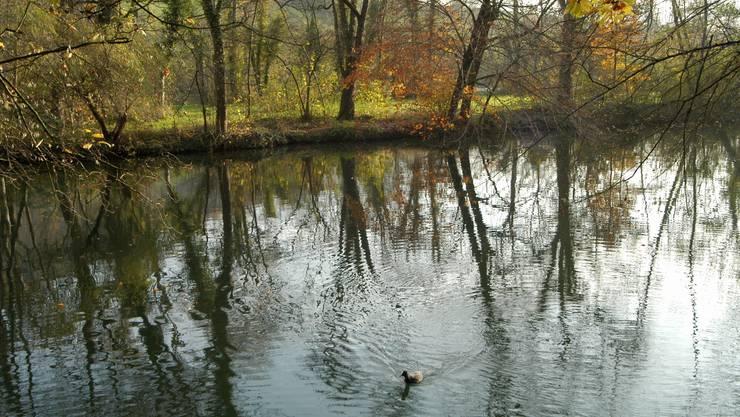 Limmatkanal bei Würenlos. Flüsse Wasser. 16.11.2005.