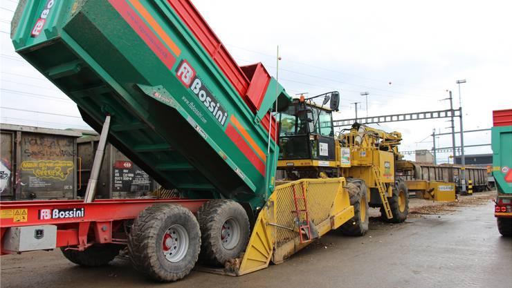 Tonnenweise werden im Birrfeld mit der «Bahnratte» Zuckerrüben auf die Bahnwagen verladen.