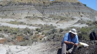 Der US-Geologe Paul Renne nimmt im US-Bundesstaat Montana Proben von Vulkanasche