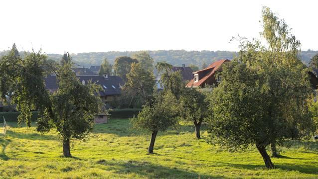 In Magden besteht ein Förderprogramm für Hochstammbäume. zvg