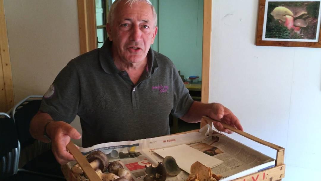 «Einen Schleierling ohne Kontrolle zu essen, wäre zu gefährlich»: Warum Robert Stucki aus Würenlos ausnahmsweise zur Pilzkontrolle kommt.