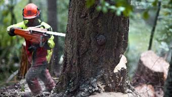 Jedes Jahr werden rund 15 Milliarden Bäume gefällt.