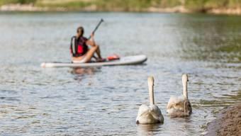 Gerade, weil sie so leise sind, sollen Stand Up Paddles eine enorme Wirkung auf Wasser- und Zugvögel haben.