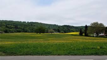 Hier auf der Hintermatt im Bergdietiker Ortsteil Kindhausen soll ein neues Alterszentrum entstehen. Das Bundesgericht hat eine Beschwerde dagegen abgewiesen. Dem Widerstand tut dies keinen Abbruch.DEG