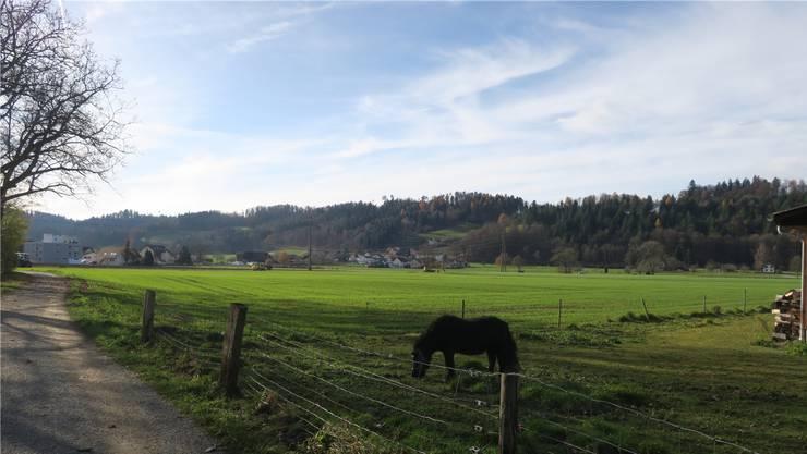 In der Hegmatte zwischen Suhre und Suhrentalstrasse sollen Anlagen für die WSB gebaut werden.