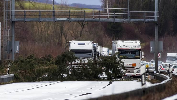Nichts geht mehr: Auf der Autobahn bei Wangen a.A. stoppt ein umgefallener Baum den Verkehr. Bei Oensingen kippten gar mehrere Lastwagen um. Christian Merz/key
