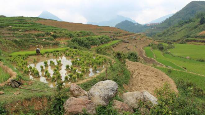 Ist es mit der Idylle bald vorbei? Reisfeldterrassen in der Nähe des vietnamesischen Städtchens Sapa. Foto: Anemi Wick
