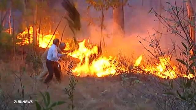 Verzweifelter Waldbrand-Kampf in Portugal