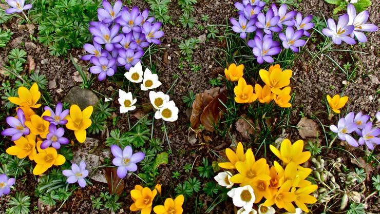 Andreas Petrin schickt uns Blumen in Unterengstringen.