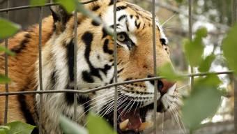 Eine Tierschutzorganisation in Kanada hat am Dienstag aufgrund von toten Tieren in einem Zoo Alarm geschlagen. (Symbolbild)
