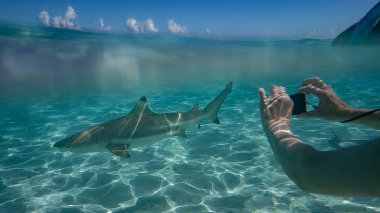 Die Unterwasserwelt kann man hautnah erleben