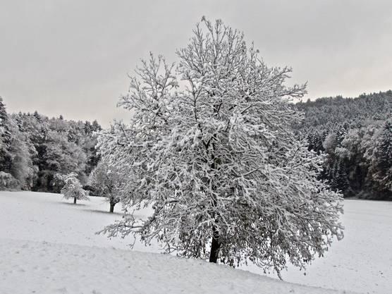 Schnee auf dem Altberg