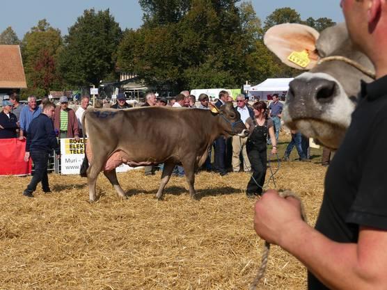 Miss Horba wurde die Kuh Petunia von Reto Villiger in Auw