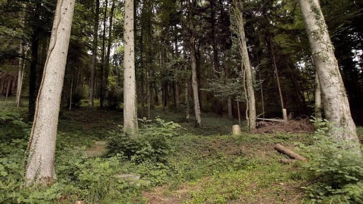Im Wald wird die Biodiversität gefördert. (Archiv)