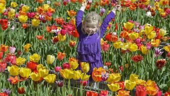 Das lässt Mutterherzen höher schlagen: Ein selbst gepflückter Blumenstrauss zum Muttertag. (Archivbild)