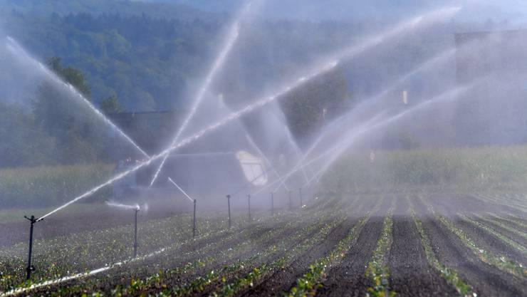 Die Konzentration der Abbauprodukte des Pflanzenschutzmittels Chlorothalonil im Grundwasser darf den Höchstwert von 0,1 Mikrogramm pro Liter nicht überschreiten.