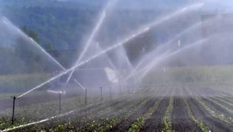 Das Bewässerungssystem soll verbessert werden und so gegen Trockenheit schützen.