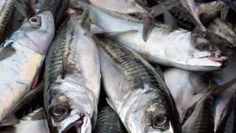 Gefährdete Fischbestände: Forderungen nach anderen Richtwerten für die Fangzahlen werden laut