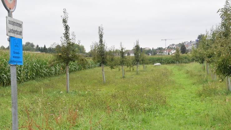 Das Grundwasserpumpwerk Eichholz liegt mitten in einem landwirtschaftlich intensiv genützten Gebiet zwischen Waltenschwilerstrasse und Bünz.