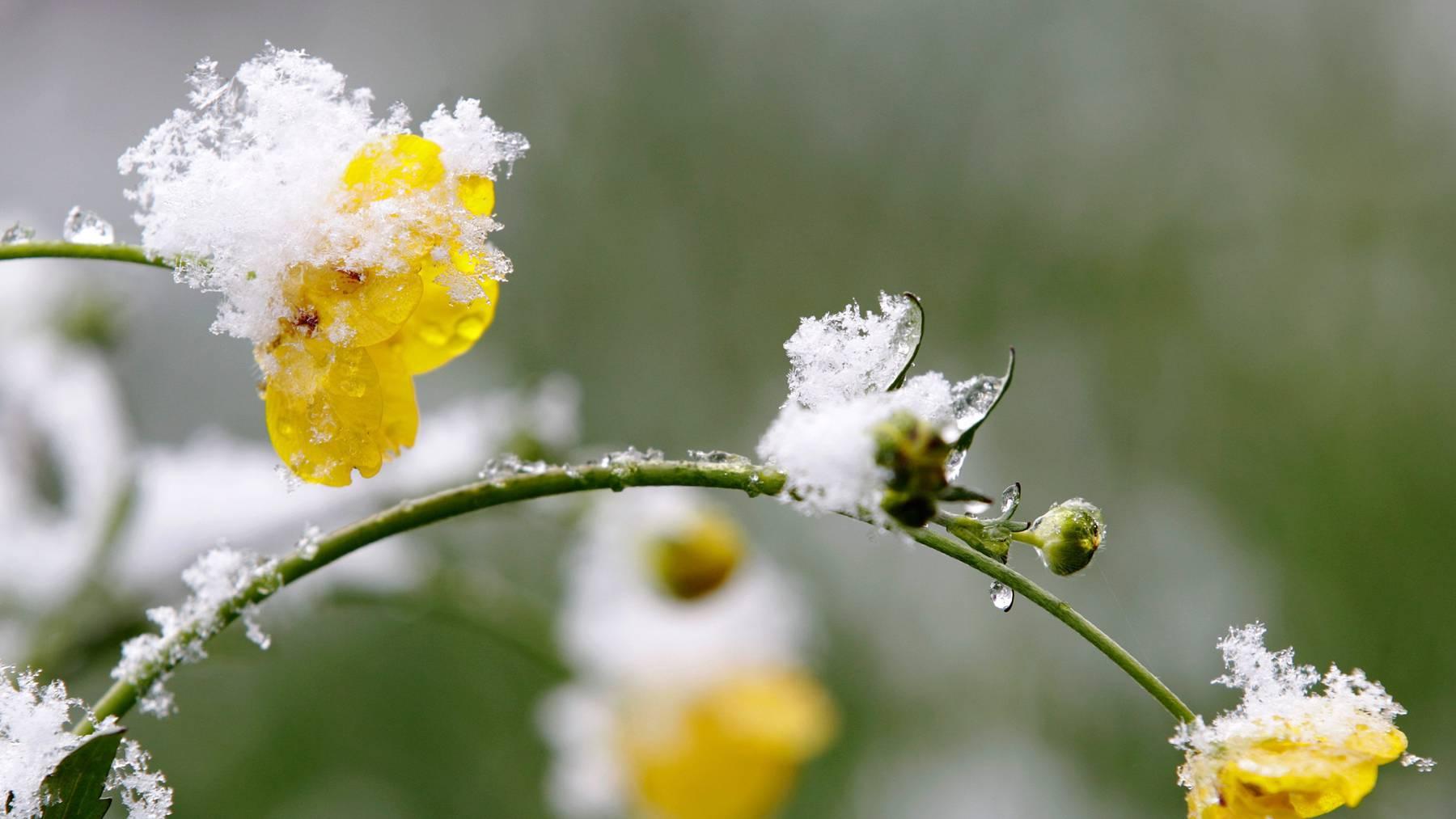 Wie gut kennst du dich mit dem Frühling aus? Beweise dein Wissen im Quiz.