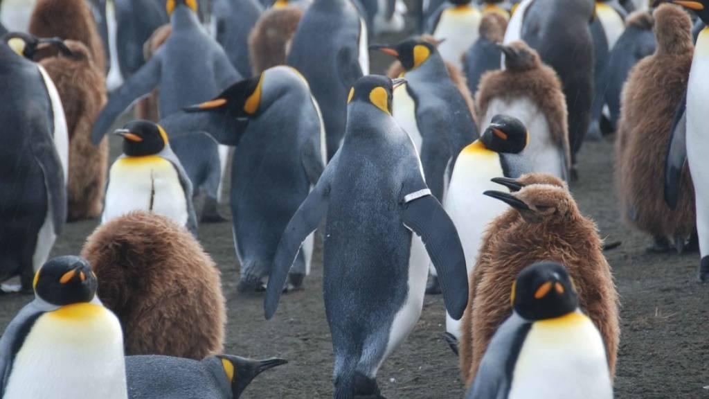 Klimawandel könnte Antarktis grüner machen