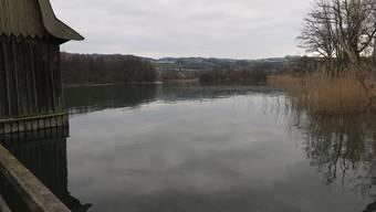 Der Aabachabschnitt von Hallwilersee in den Aabach ist ab dem 1. April gesperrt.