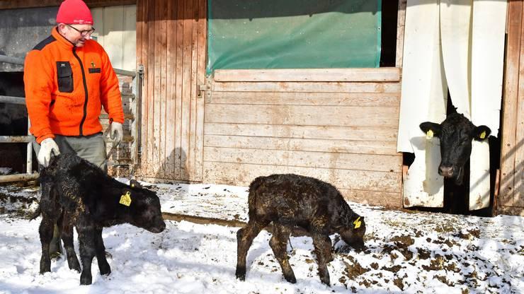 Seit 1988 ist Andreas Nussbaumer Landwirt und Betriebsleiter des Mattenhofs. Er züchtet Black Angus-Rinder.