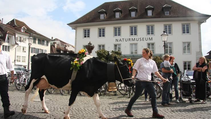Auch das Naturmuseum profitiert  in Zukunft von Langendorfer Geldern.