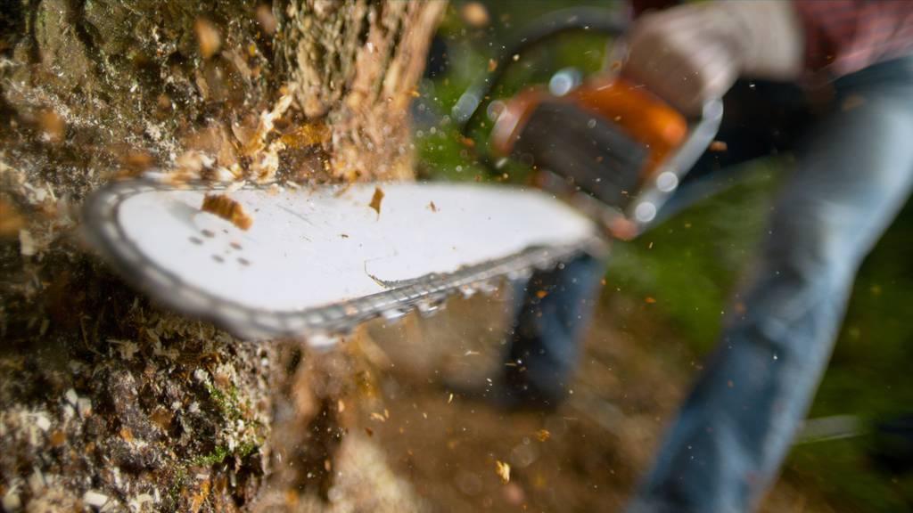 Der Mann wurde bei Forstarbeiten tödlich verletzt. (Symbolbild)