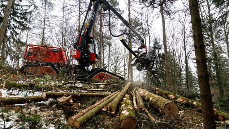 Der Vollernter fällt nicht nur Bäume, er entastet sie auch und schneidet sie auf eine definierte Länge zu.