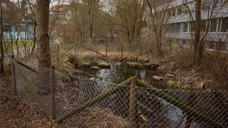 Rechts ist das Schulhaus Mühlematt. Der Weiher im Vordergrund wird aufgefüllt. Der Weiher dahinter bleibt.