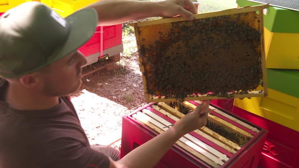 Bienendiebe: Seit Wochen werden Imkern die Völker geklaut