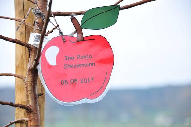 Damit jede Familie auch den richtigen Baum bekommt, sind die Setzlinge mit Name und Geburtsdatum angeschrieben.
