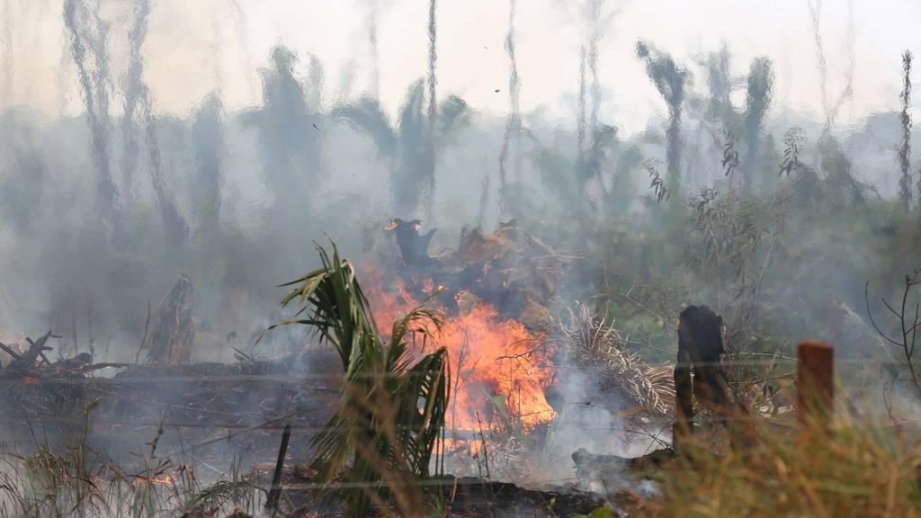 So kannst du dem Amazonas helfen