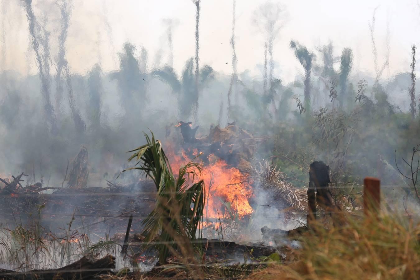 Brände im Amazonas: Das Nationale Institut für Weltraumforschung zählt seit Anfang Jahr bis zum 21. August 74'155 Waldbrände. (© WWF Brasilien)