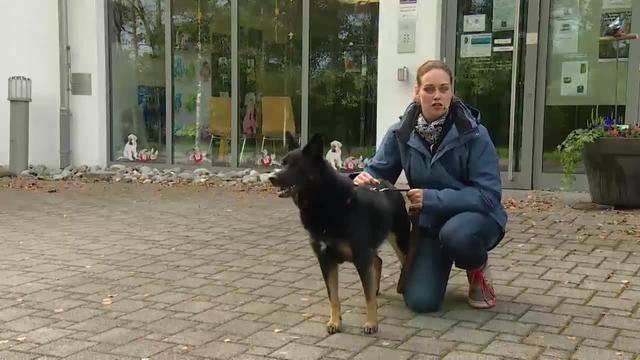 Aus dem Tierheim des Tierschutzvereins Liechtenstein in FL-Schaan