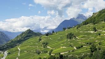 Rebberge oberhalb von Sion im Kanton Wallis (Symbolbild)